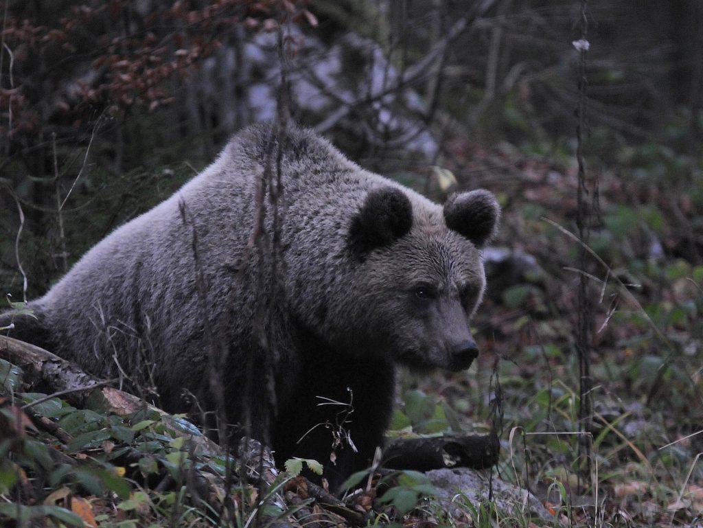 Medvjedi i zima