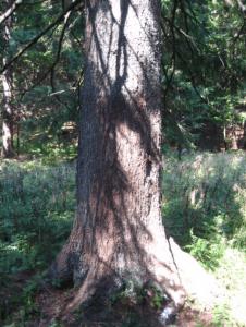 """""""Medveđa stabla"""" (Foto: M. Modrić)"""