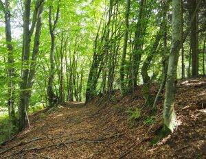 Detalj bukove šume u Gorskom kotaru (foto: arhiva JUP)