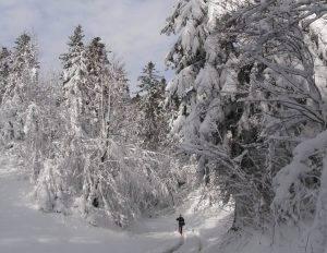 U potrazi za risjim tragovima u bitorajskim šumama (foto: Marko Modrić)