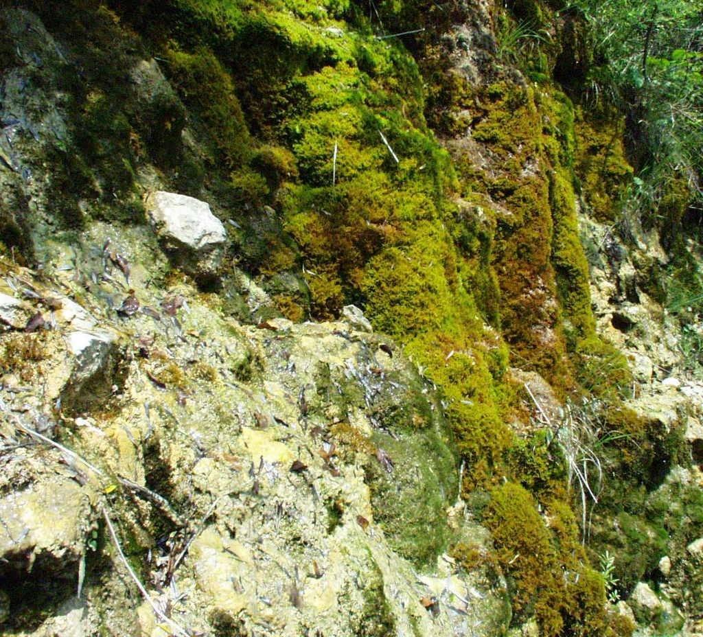Rijetka staništa Gorskog kotara