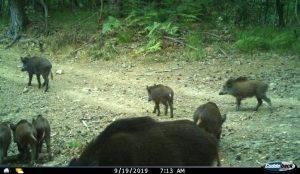 Vukovi u dolini Rječine