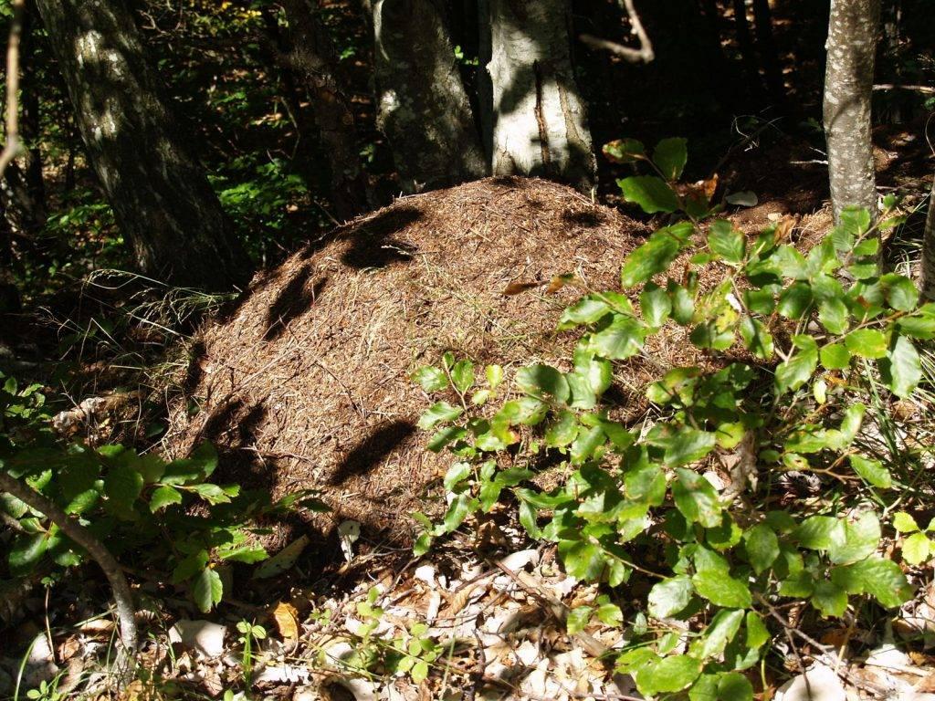 Medvjedi i mravi