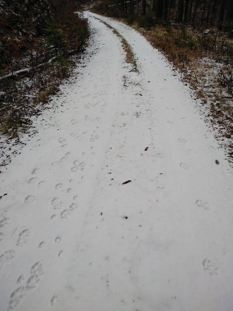 """""""Ne pada snijeg da pokrije brijeg, već da zvijeri otkrije trag"""""""