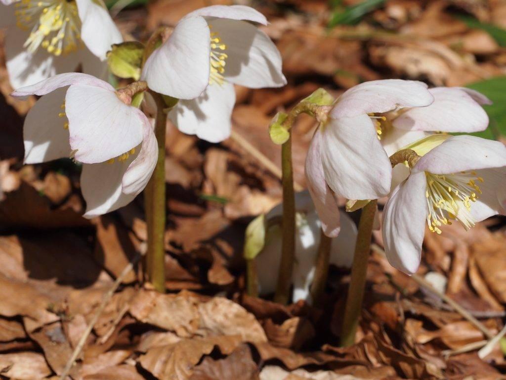 Zimska cvatnja