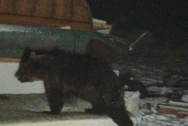 Medvjedi i otpad