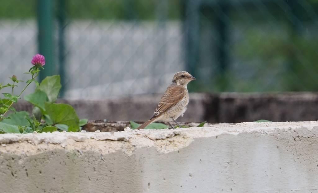 Ptice oko našeg Centra
